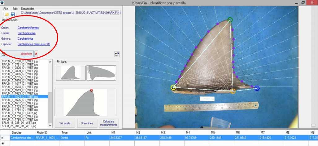 iSharkFin, il software per salvare gli squali dall'uomo