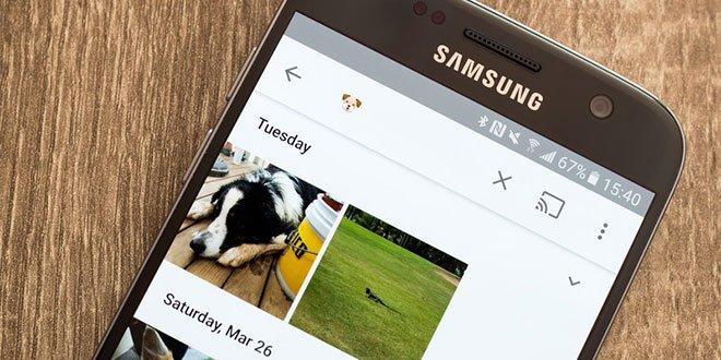 Google Photos animerà foto e video degli amici a quattro zampe