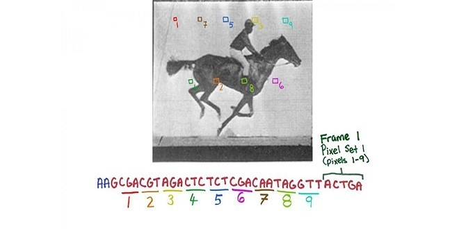 Memorizzata una GIF nel DNA di un batterio