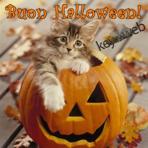 felice halloween gatto