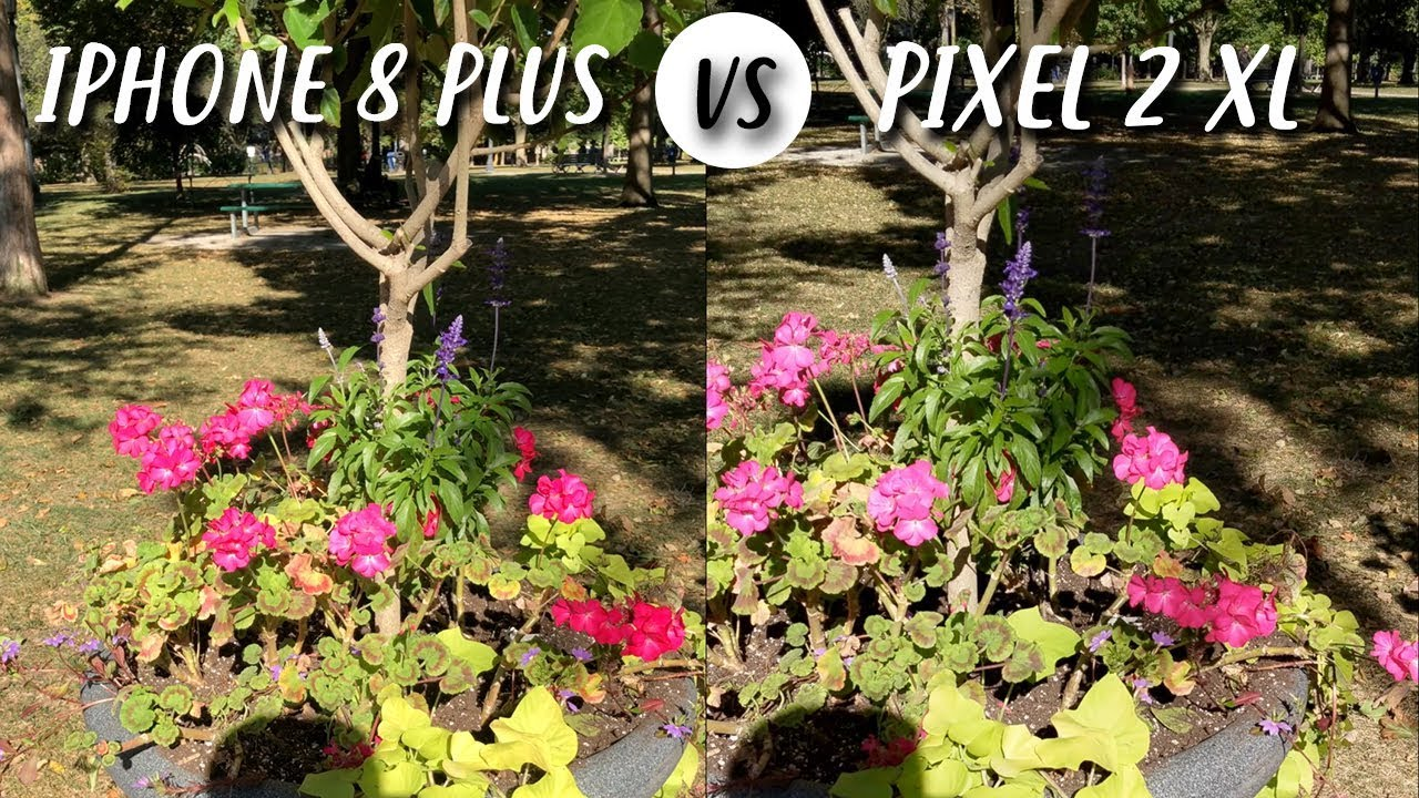Google Pixel 2 XL vs iPhone 8 Plus in un primo camera test