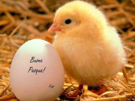 Mandiamo gli auguri di buona Pasqua 2018 con frasi, immagini, GIF e video divertenti