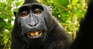 Selfie perfetto: guida ai suggerimenti e agli strumenti utili